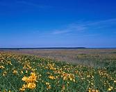 Flower Odaitou Hokkaido Japan Blue sky Flower garden Prairie
