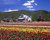 Blue sky Clouds Mountain Green Windmill Red White Yellow Tulip park Kamiyuubetsu Hokkaido Japan