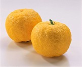 Yellow Yuzu Citron
