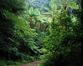 Kinsakubaru Virgin forest, Naze, Amami Oshima, Kagoshima, Japan
