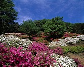 Godaison Azalea Ogose Saitama Japan Red White Blue sky Clouds