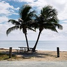 Picnic table by pair of palm trees on beach in Florida Keys, Florida, USA