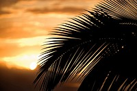 Palm leaf silhouette against sunset in Maui, Hawaii, USA