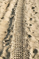 Tire track in the sand