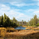 Landscape with stream and field in Yellowstone National Park, Wyoming.