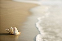 Conch shell on beach with waves