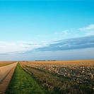 Dirt road going through dead cornfield in rural South Dakota