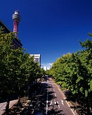 the Yamashita Park_Street, With Several Trees on Both Sides, Front View, Yokohama City, Kanagawa Prefecture, Japan