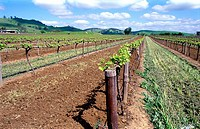 Barossa Valley Vineyards, South Australia