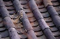 Roof of Korean Traditional House, Korea