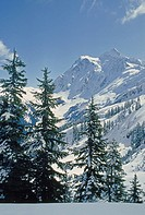 Mount Shuksan, in North Cascades National Park background.