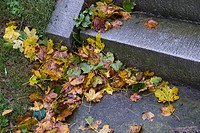 Autumn leaves on a step after a rain storm