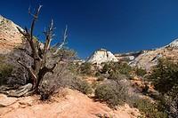 A dry desert landscape.