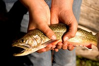 Close up of hands holding a caught fish.