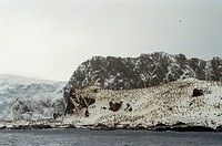 A huge chinstrap penguin rookery near Ernest Shackleton´s famous camp.