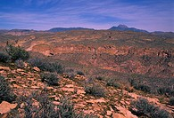 Desert landscape of Arizona.
