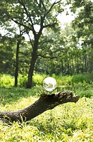 Glass globe on log in forest