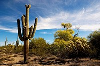 Organ Pipe Cactus park in Arizona, USA