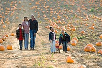 A family walking through a field of pumpkins
