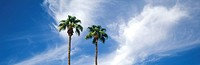 Tops of two tall palm trees against wispy clouds in blue sky