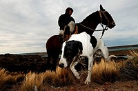Argentina, Patagonia, Puerto Deseado, gaucho patrolling the Pampas on horseback with his dog
