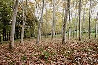 Forest, Sant Pere de Torelló. Osona, Barcelona province, Catalonia, Spain