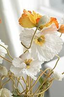 Flowers, Close_up