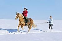 Ski jöring with Haflinger horse