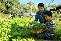 Multi_ethnic father and son harvesting organic produce
