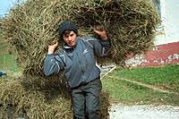Young man harvesting hay, Magura_Moieciu, Transsylvania, Romania