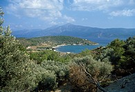 Samos Greece Mycale Straits Pine And Olive Trees