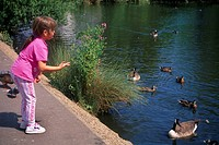 Young Girl Feeding Birds Epsom Surrey