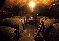 Wine barrels in wine cellar, Rust, Burgenland, Austria, wine cask