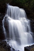 Waterfall in a forest, US Glacier National Park, Montana, USA