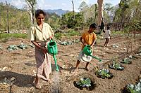 Watering cabbage, vegetable and fruit garden communally farmed in Kutepe, Oecussi-Ambeno. East Timor
