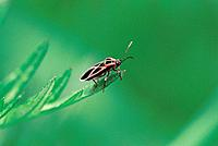 Beetle and green leaf (thumbnail)