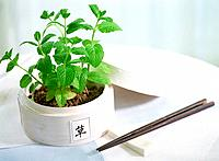 Potted Plant and chopsticks