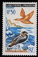 Common Eider Somateria mollissima, postage stamp, Saint_Pierre and Miquelon