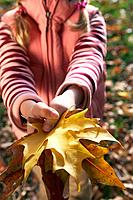 Girl holding maple leaves