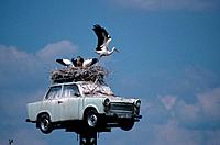 White Stork nest on Trabant, Neuruppin, Brandenburg, Germany , Ciconia ciconia