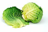 Savoy Cabbage, leaves, Brassica oleracea var. sabauda