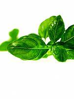 Raw Food, Herbs, Basil