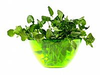 Bowl of Watercress (thumbnail)