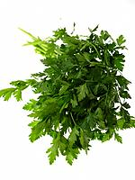Raw Food, Herbs, Flat Leaf Parsley