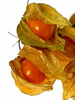 Cape Gooseberries Physalis