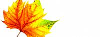 One Autumn leaf (thumbnail)