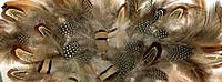 Brown and white Feathers close up