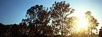 Treetops and blue sky (thumbnail)