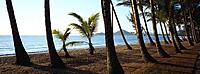 Palm Trees and Beach, Palm Cove, Queensland, Australia