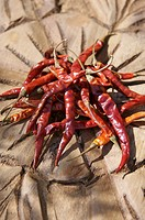 Several dried chillies on wooden background